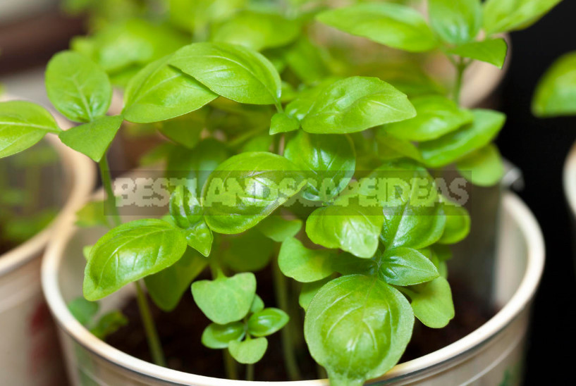 Seedlings in February: What Time to Sow?