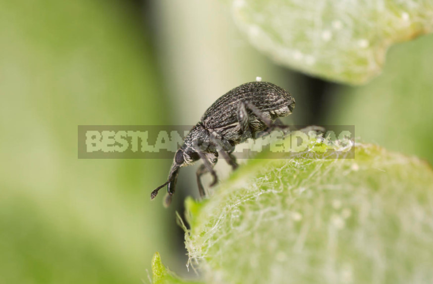10 of the Earliest Pests: How Not To Miss the First Treatment of the Garden