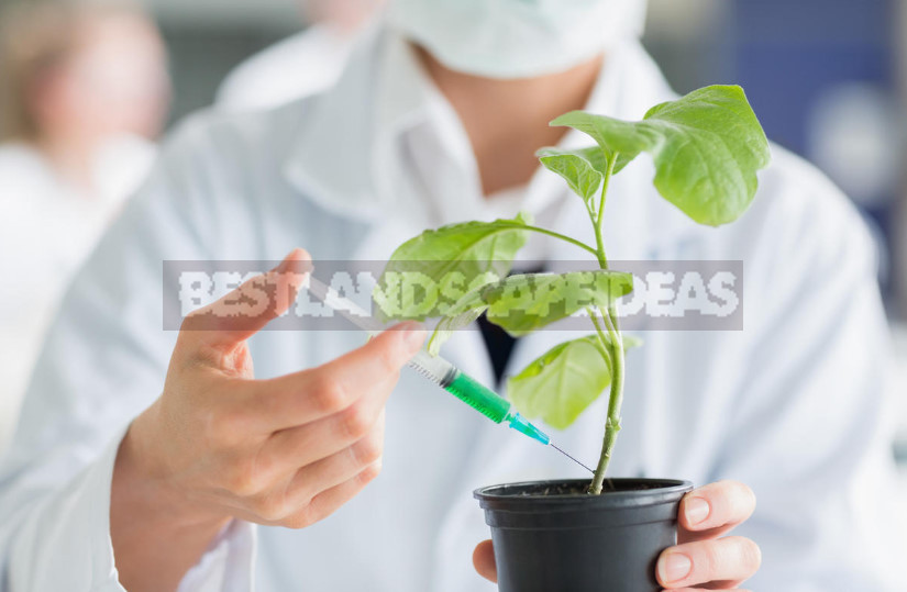 Growth promoters what they are and how to use them properly 1 - Stimulators of Plant Growth: the Correct Application (Part 2)