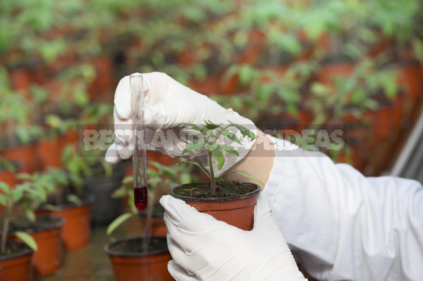 Stimulators of Plant Growth: the Correct Application (Part 2)