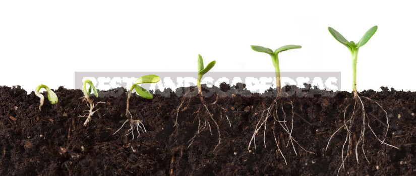 Stimulators of Plant Growth: the Correct Application (Part 1)