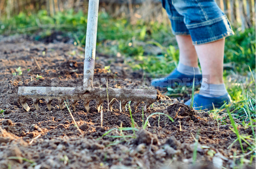 Garden Tools: Spring Readiness Check (Part 1)