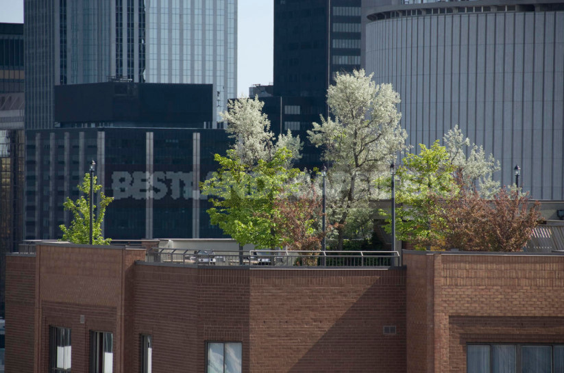 Roof garden a new wave of landscaping captures the city 1 - Roof Garden: a New Wave of Landscaping Captures the City