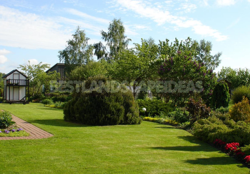 The role of the lawn in the landscape 1 - What Kind of Lawn Do You Need? Choose a Lawn for a Garden Plot