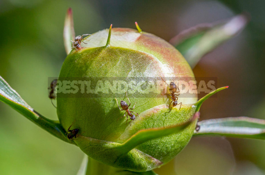 Preparations for Pest Control: Wireworm, Ants and Mole Cricket