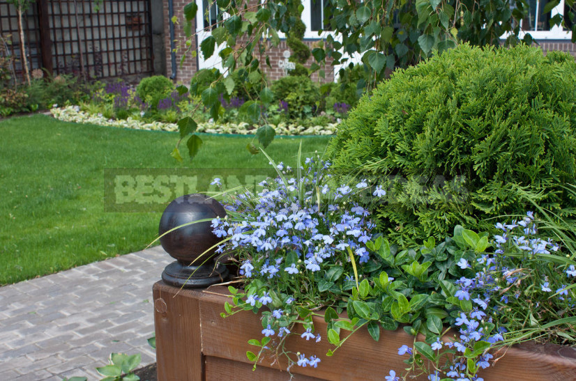 Container gardening professional advice on the choice of plants 1 - Container Gardening: Professional Advice On the Choice of Plants