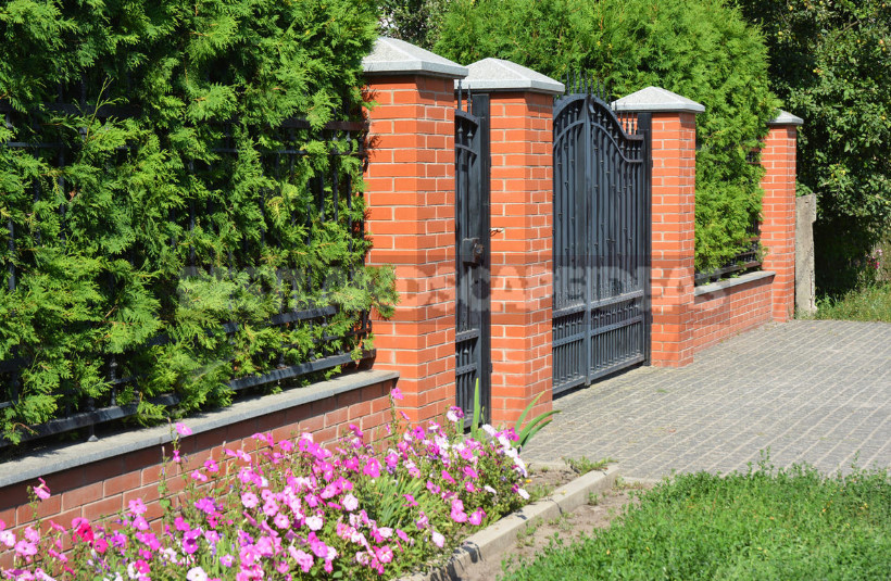 Hedge to Decorate the Fence: a Spectacular and Hardy Plants