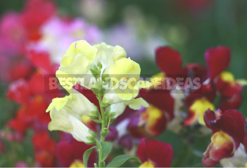 Ideas for Creative Flower Beds