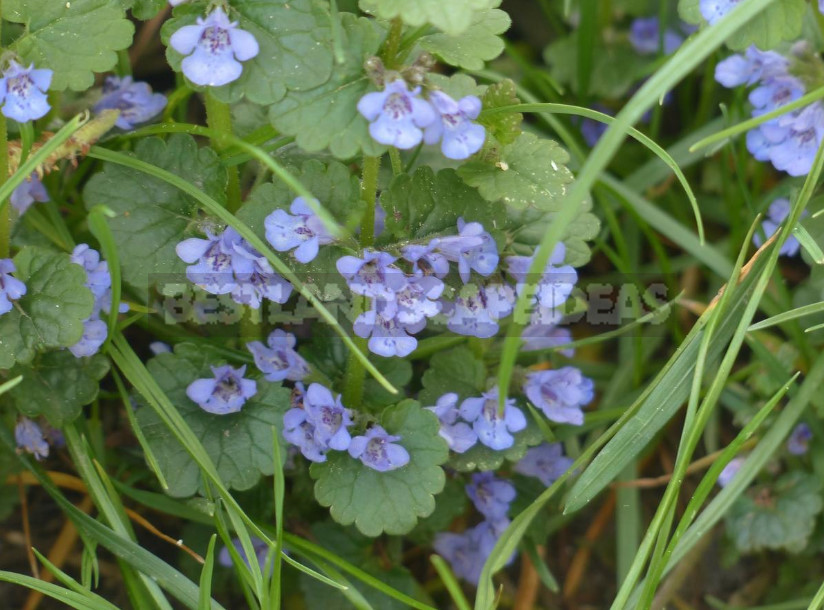 What Medicinal Plants are Harvested in May (Part 1)