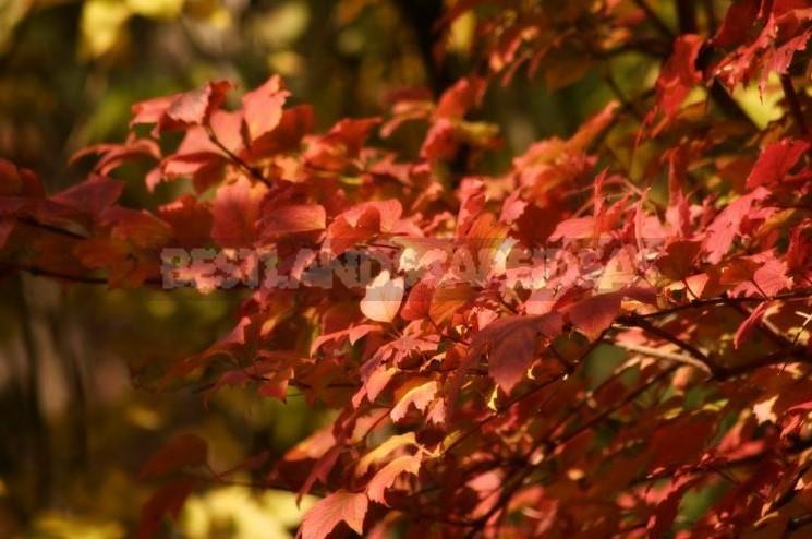 0 - Seasonal Work in the Garden: End of October - Beginning of November