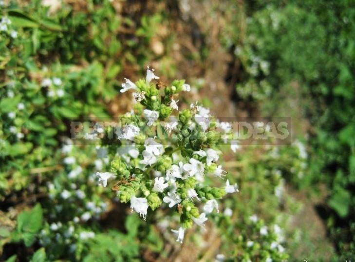 Seasonal Work in the Garden: End of October - Beginning of November