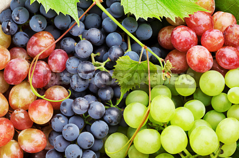 Grapes are the Berry of Life