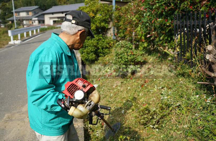 How to Choose the Best Trimmer for the Garden: Practical