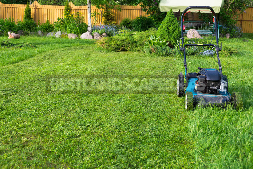How to care for lawns 300 years ago and how to do it now. Interesting fact 1 - Lawn Mowers: History and Modernity, Types and Features