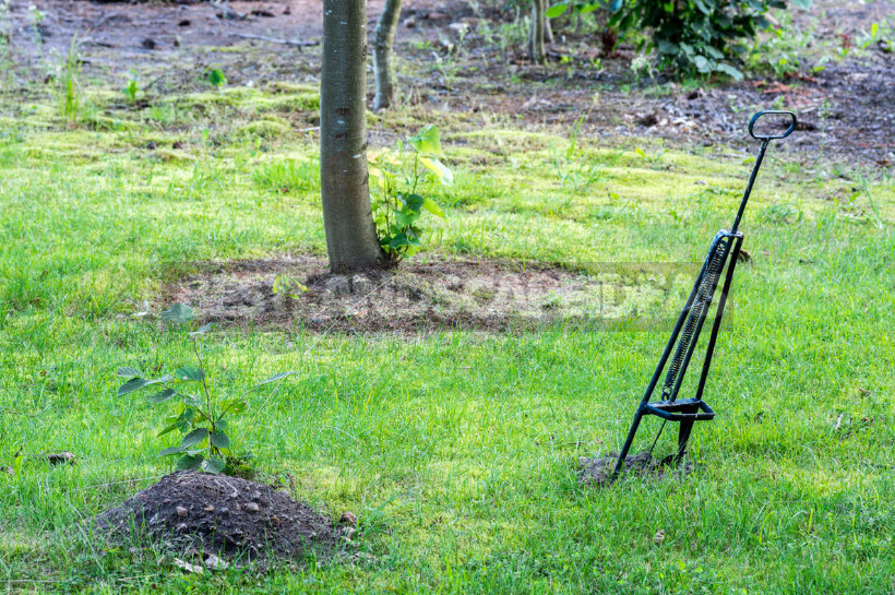 How to Get Rid of Moles: From Absurd to Really Useful Ways (Part 1)
