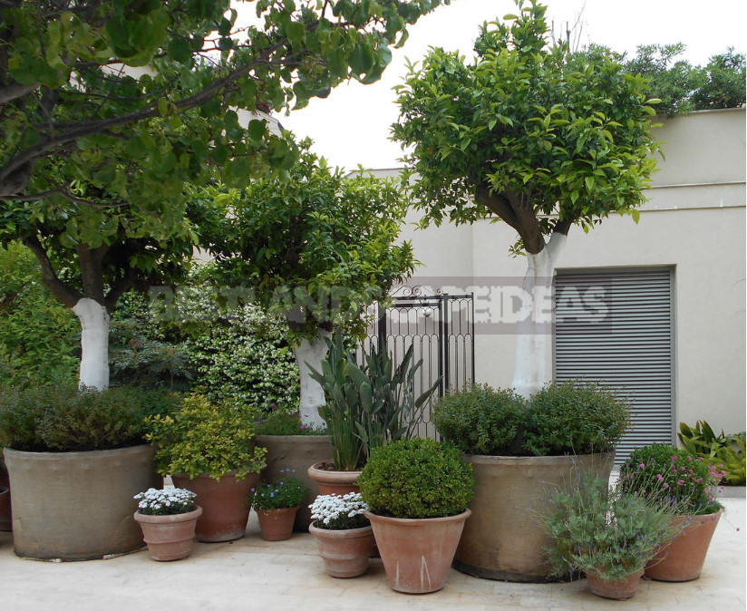 On the roof can Apple trees blossom choose plants for high rise gardens 10 - Roof Garden: Plant Selection