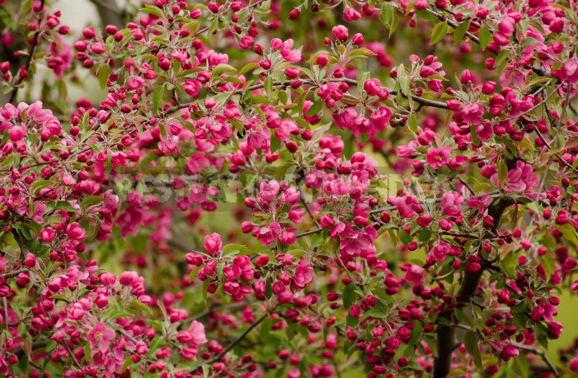 On the roof can Apple trees blossom choose plants for high rise gardens 11 - Roof Garden: Plant Selection