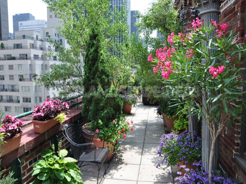 On the roof can Apple trees blossom choose plants for high rise gardens 3 - Roof Garden: Plant Selection