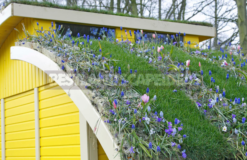 On the roof can Apple trees blossom choose plants for high rise gardens 7 - Roof Garden: Plant Selection