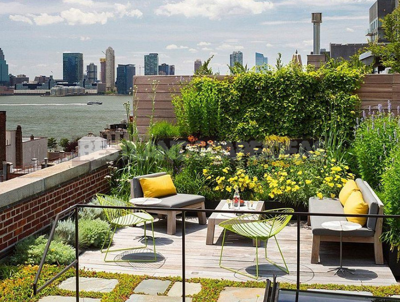 On the roof can Apple trees blossom choose plants for high rise gardens 8 - Roof Garden: Plant Selection