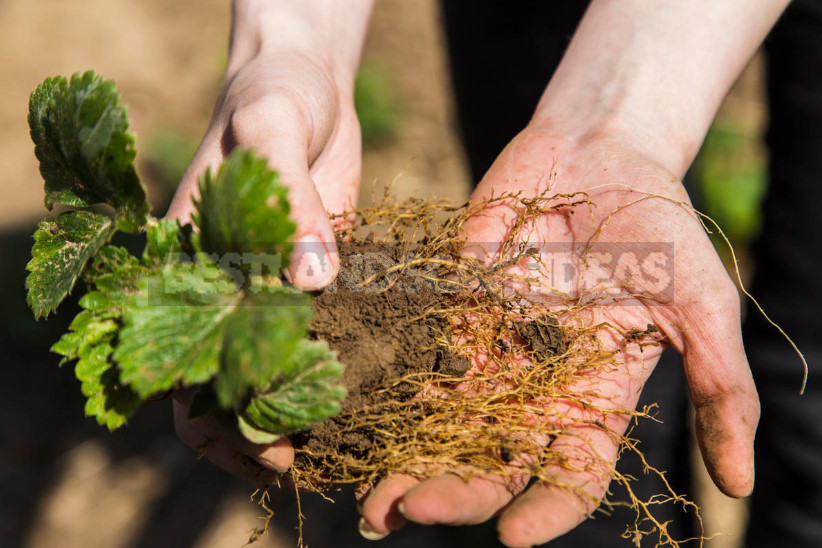 Root growth stimulants 1 - Root Growth Stimulants: What You Need to Know