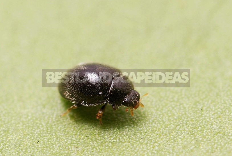 The Medics in the Garden: How Not to Confuse Beneficial Insects With Pests