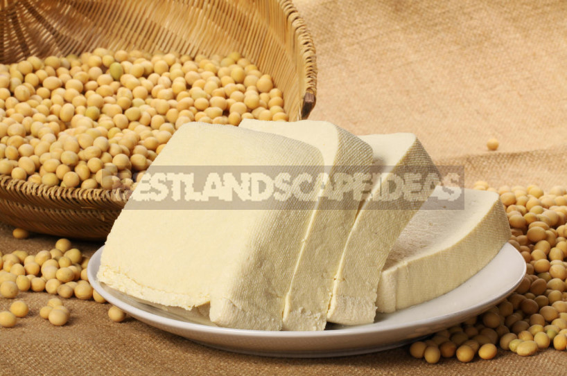 Tofu cheese is a universal product for your health 1 - Tofu Cheese: History and Benefits of Soy Product