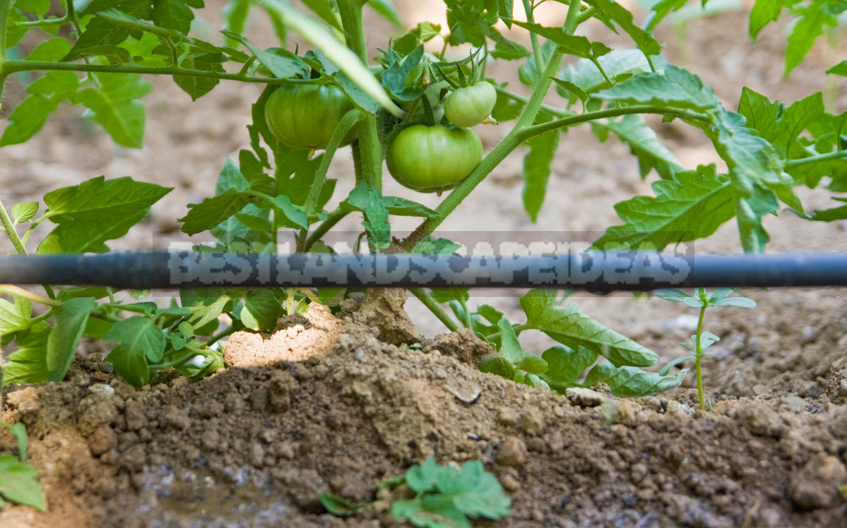 Drip Irrigation of Greenhouse