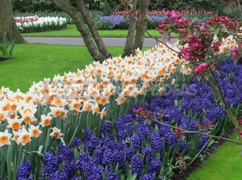 Flower bulbs for autumn planting 1 - Flower Bulbs for Autumn Planting