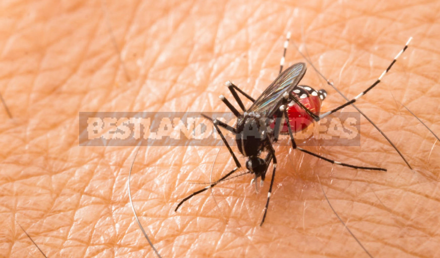 What are Dangerous Mosquitoes and How to Deal With Them (Part 1)