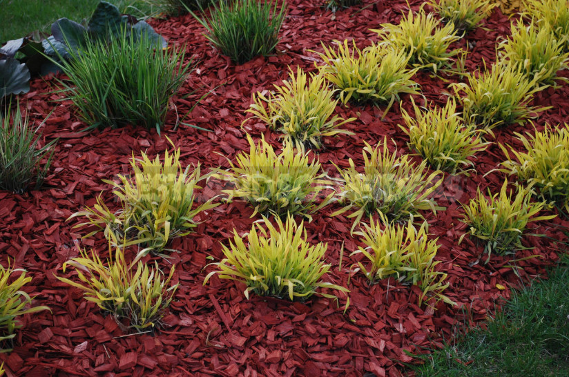 What people mulch beds 14 most practical ways that I was able to peek 1 - Organic Materials for Mulching and Features of their Application