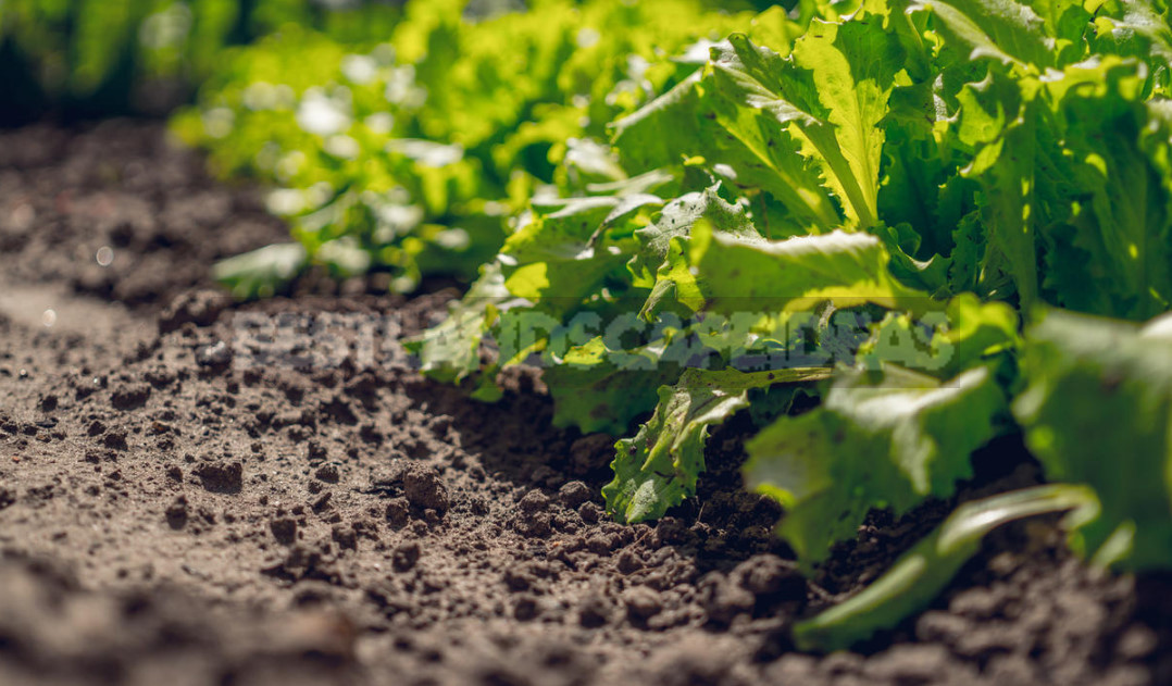 Drip Irrigation Systems: Capabilities, Device, Use