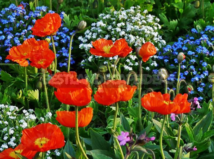 Flower Beds of Continuous Flowering: Unfading Garden Decoration