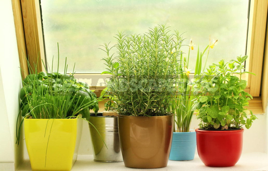 Create a charming composition of potted herbs fragrant 5 contenders 1 - Create a Charming Composition of Potted Herbs: Fragrant 5 Contenders