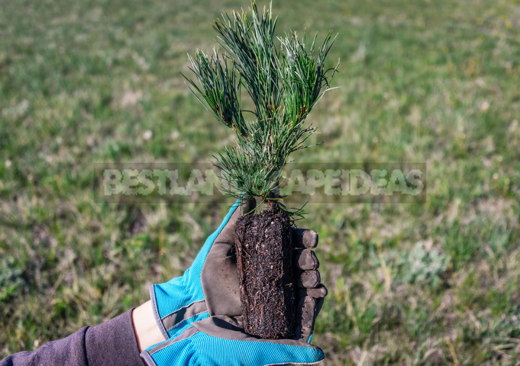 Five main rules of autumn planting trees and shrubs 3 - Five Main Rules of Autumn Planting Trees And Shrubs
