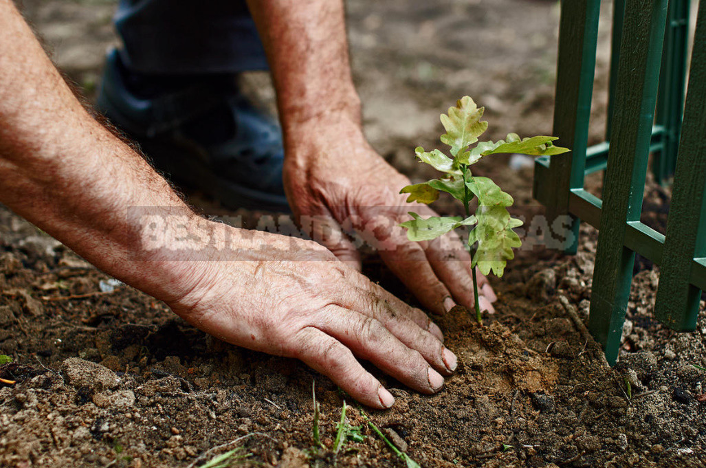 Five main rules of autumn planting trees and shrubs 4 - Five Main Rules of Autumn Planting Trees And Shrubs
