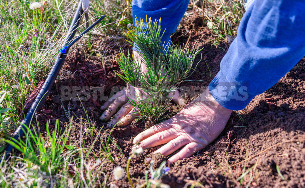 Five main rules of autumn planting trees and shrubs 5 - Five Main Rules of Autumn Planting Trees And Shrubs