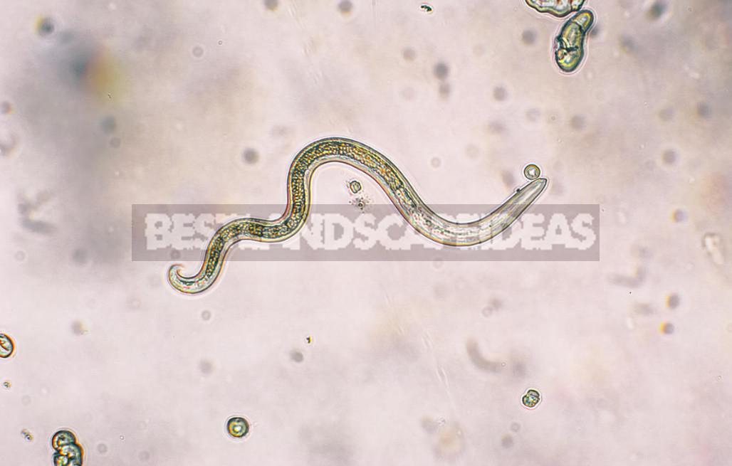 Intruders common types of intestinal parasites 3 - Intruders: Common Types of Intestinal Parasites