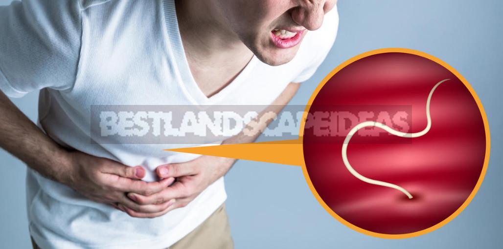 Intruders common types of intestinal parasites 8 - Intruders: Common Types of Intestinal Parasites