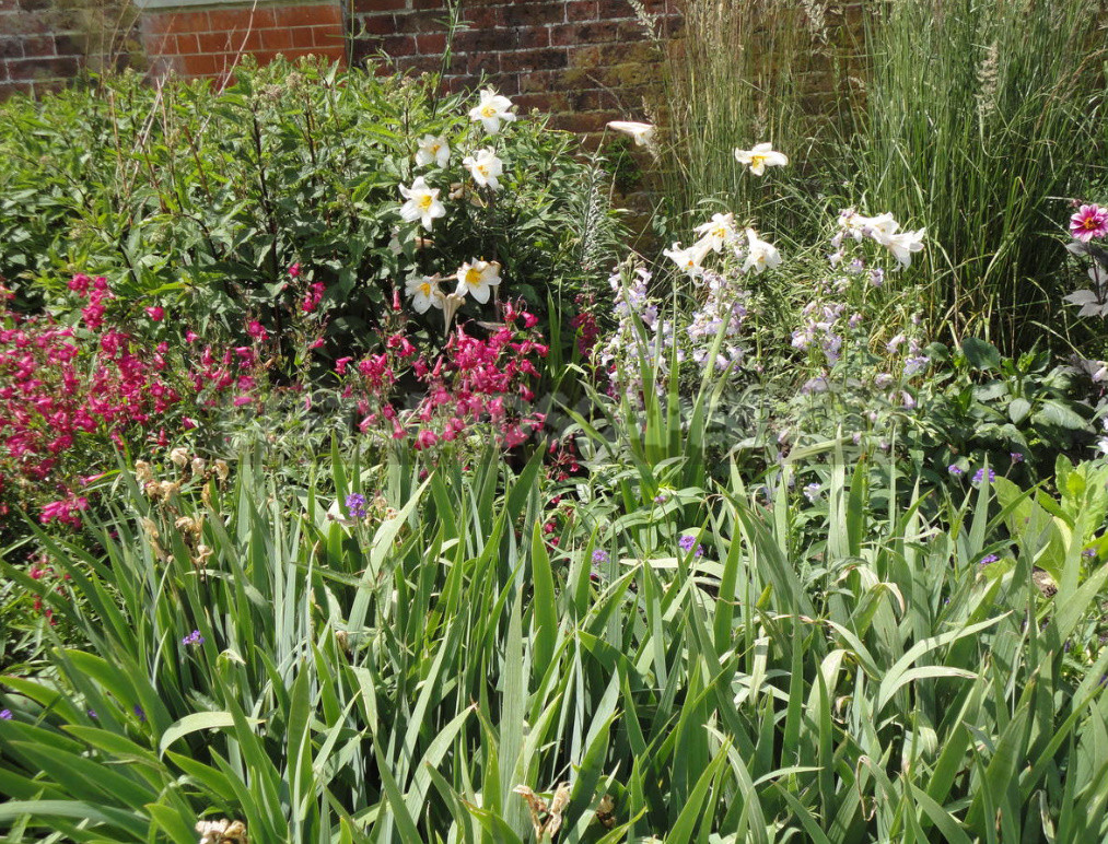 Planting lilies in the garden where how when and what to plant 2 - Planting Lilies in the Garden: Where, How, When And What to Plant