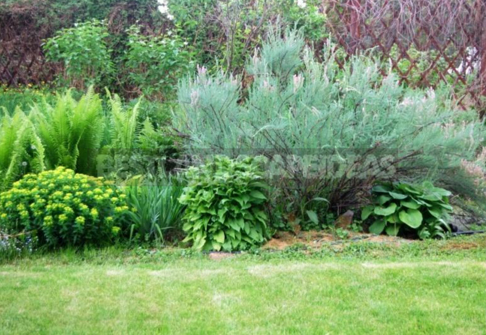 Rare but beautiful sparse shrubs for your garden 7 - Rare But Beautiful: Sparse Shrubs for Your Garden (Part 1)
