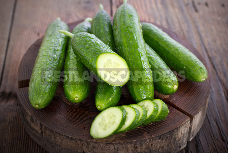 Why are cucumbers bitter And they have 5 reasons 1 - Why are Cucumbers Bitter? And they Have 5 Reasons. (Part 2)