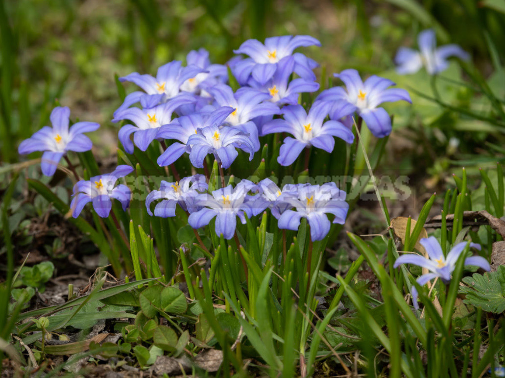 Ten Bulbs That Need Time to Plant In the Fall