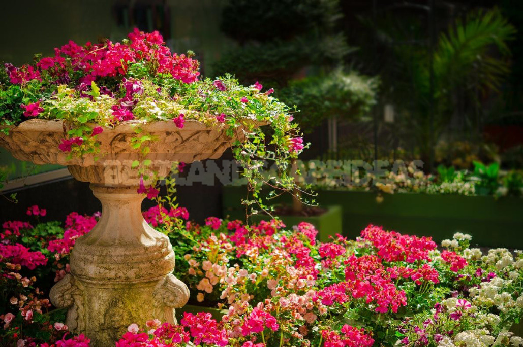 Feng Shui Rules for Your Garden