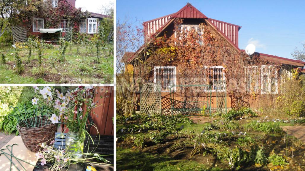 Caring for Roses in September: Start Preparing for Winter