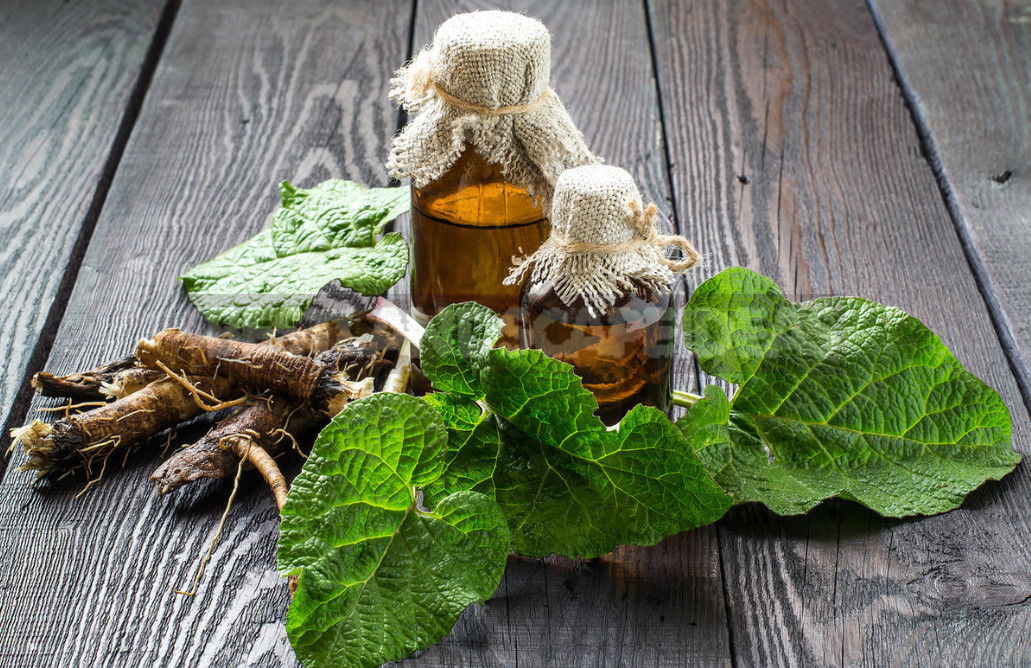 Dandelion And Burdock Roots Against Skin And Hair Diseases 1 - Dandelion And Burdock Roots Against Skin And Hair Diseases