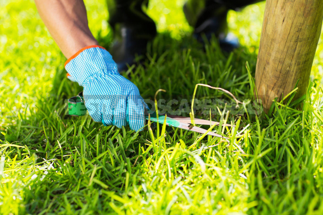 Five mistakes in the care of the lawn which can irretrievably spoil it 10 - Five Mistakes In the Care of the Lawn, Which Can Irretrievably Spoil It