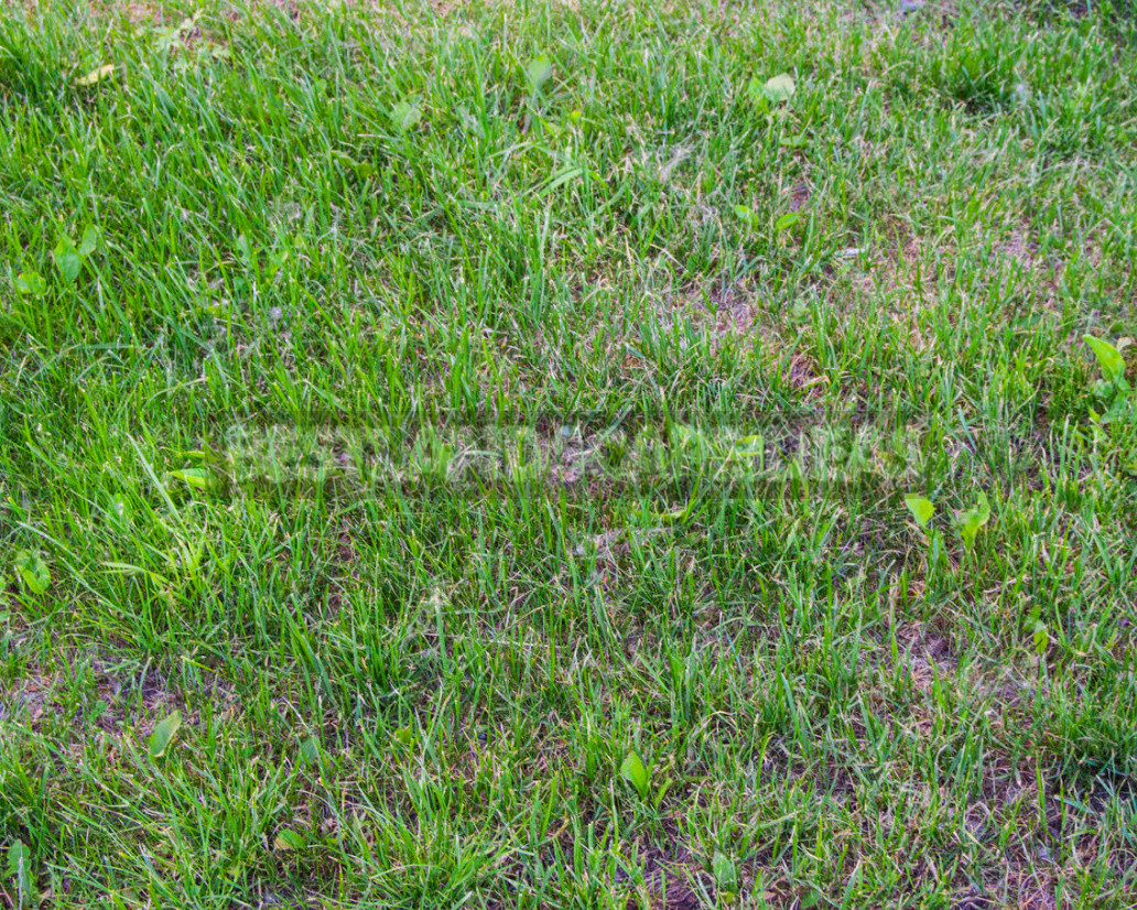 Five mistakes in the care of the lawn which can irretrievably spoil it 2 - Five Mistakes In the Care of the Lawn, Which Can Irretrievably Spoil It