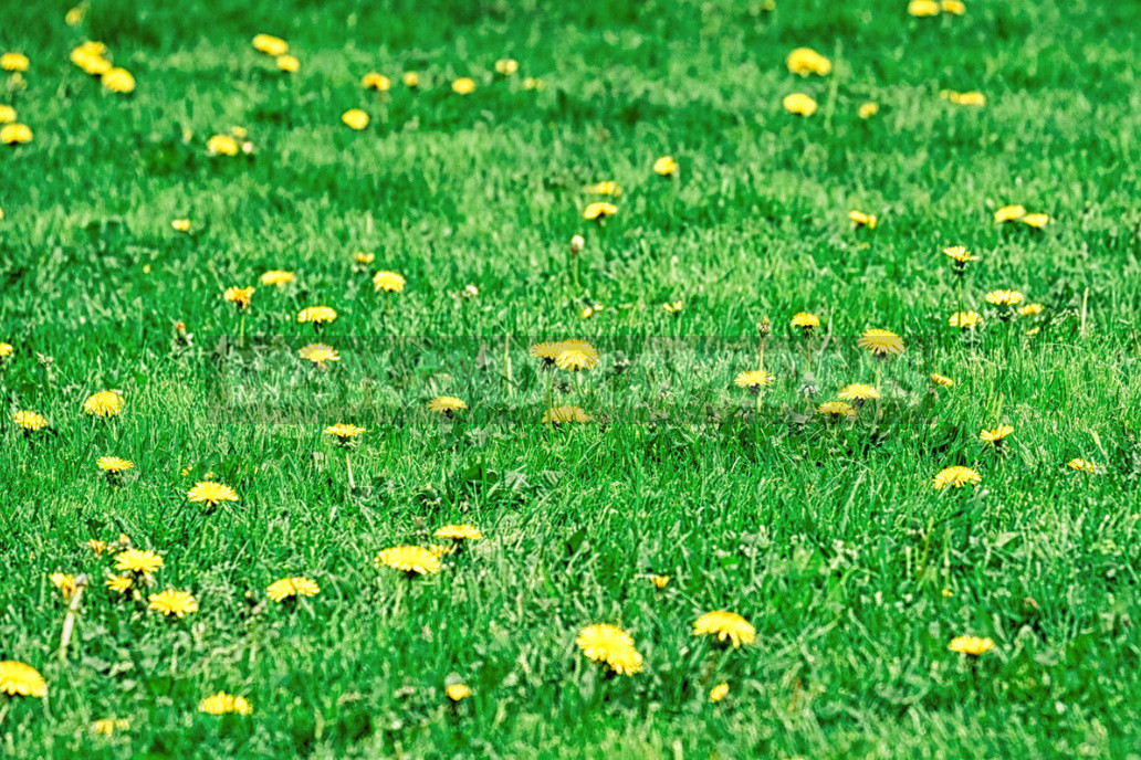 Five mistakes in the care of the lawn which can irretrievably spoil it 3 - Five Mistakes In the Care of the Lawn, Which Can Irretrievably Spoil It