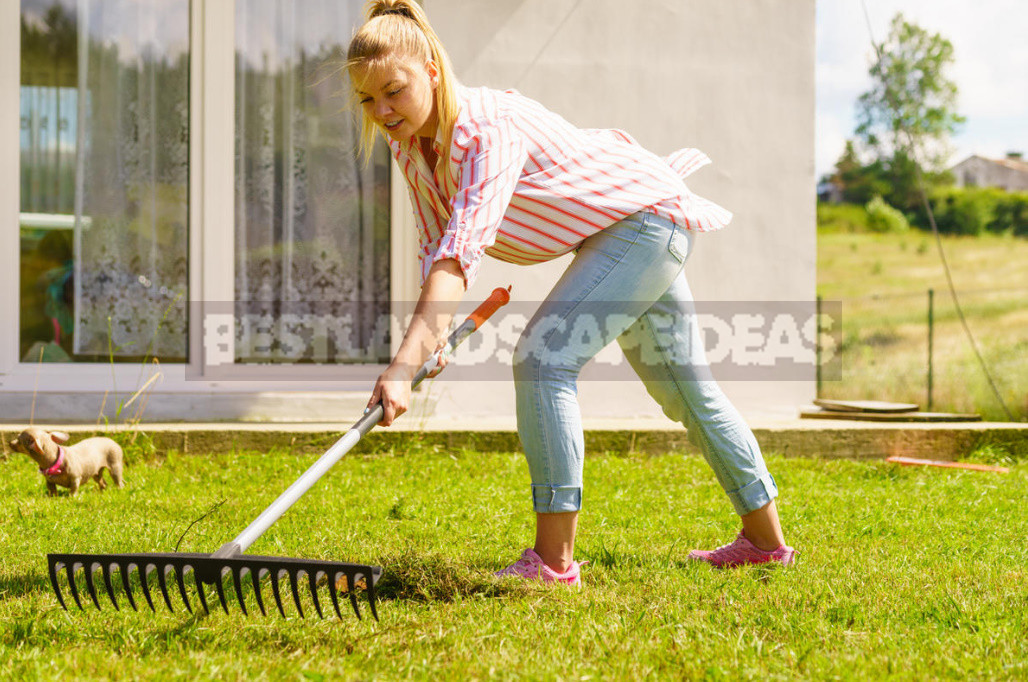 Five mistakes in the care of the lawn which can irretrievably spoil it 6 - Five Mistakes In the Care of the Lawn, Which Can Irretrievably Spoil It